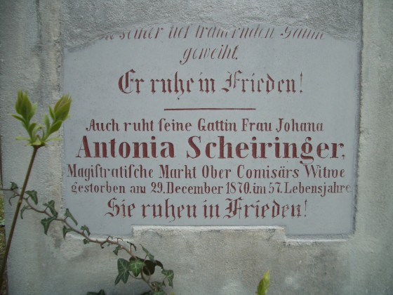 Antonia Scheiringer